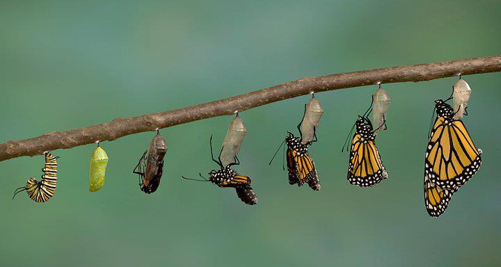 catterpillar proces